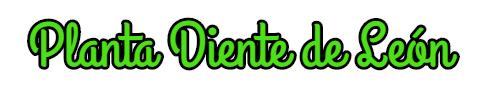 La Planta Diente de León,